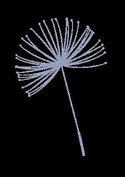 pusteblume-dunkler